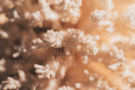 close up view of beautiful coral as background