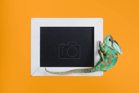 beautiful bright green lizard on blackboard in white frame isolated on orange