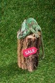 beautiful bright green chameleon sitting on stump with sale sign