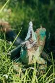 "Постер, картина, фотообои ""красивый яркий зеленый хамелеон сидя в зеленой траве и глядя на камеру"""