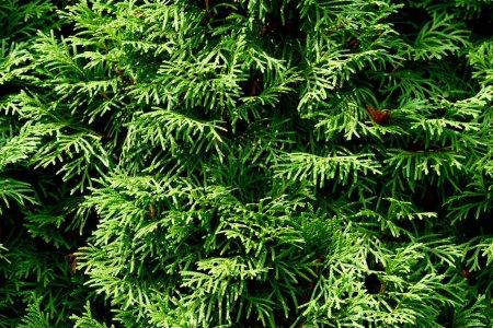 vista de cerca de la planta verde con hermosa mariposa como fondo