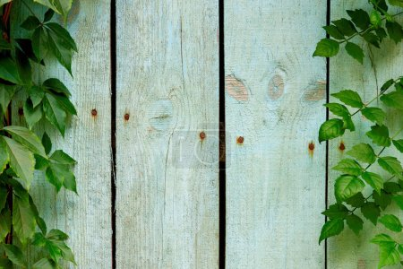 full frame of wooden planks and green leaves as backdrop