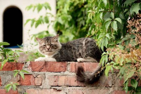 fluffy cat resting on bricks with green plants around