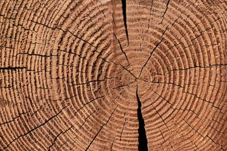 Photo for Full frame of wooden stump texture as backdrop - Royalty Free Image