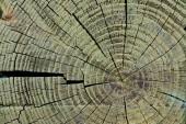 """Постер, картина, фотообои """"полный кадр текстуры деревянных пней как фон"""""""