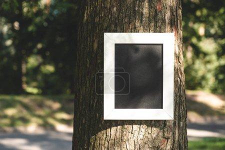 empty board in frame on grey bark of tree in park