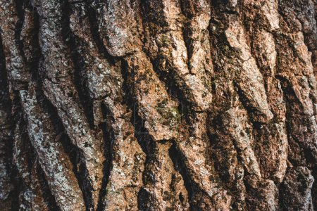 Close up texture of brown bark of tree