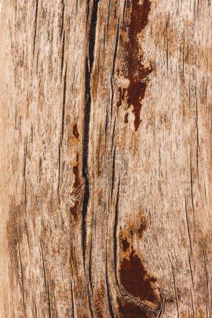 Close up of light brown bark of tree