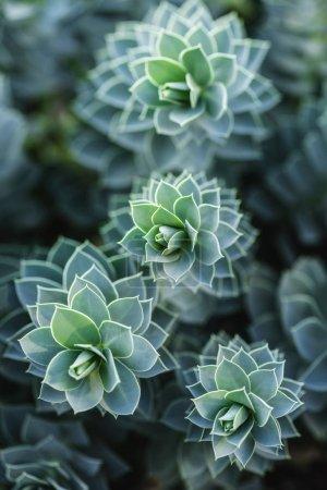 Photo pour Mise au point sélective de belles plantes succulentes dans le parc - image libre de droit