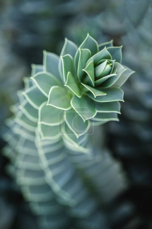 close up of beautiful succulent with blurred background