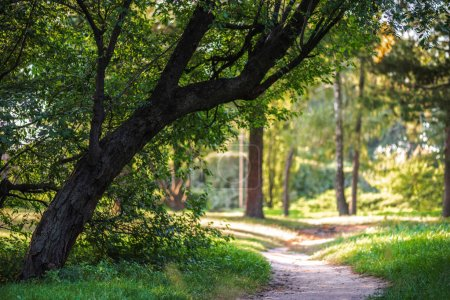 Photo for Empty pathway in park with green trees and plants around - Royalty Free Image