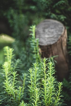 beautiful green plants and blurred stump on background in park