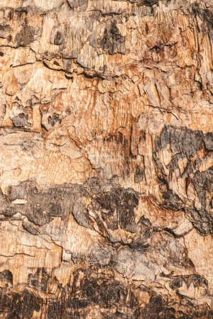 Close up of grey and brown bark of tree