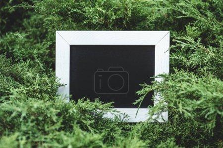 empty wooden board in green bushes