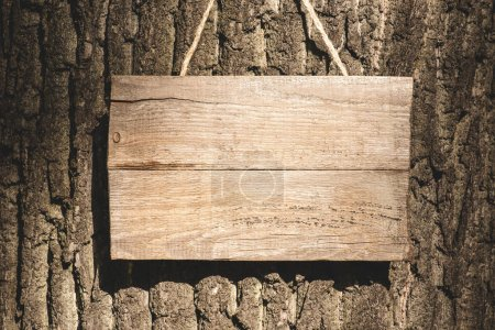 empty wooden board hanging on grey bark of tree