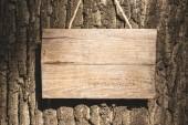 empty wooden board hanging on grey bark of tree