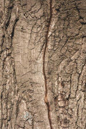 Gros plan d'une écorce grise texturisée d'arbre