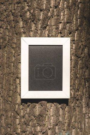 empty wooden blackboard on grey bark of tree