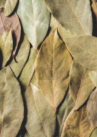 full frame view of aromatic dried bay leaves background