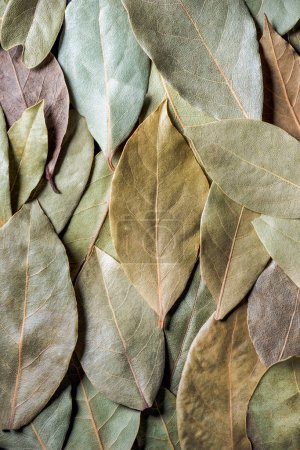 Photo for Top view of aromatic dried bay leaves background - Royalty Free Image