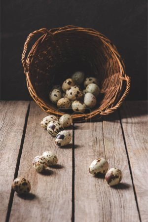 organic quail eggs in wicker basket on rustic wooden table