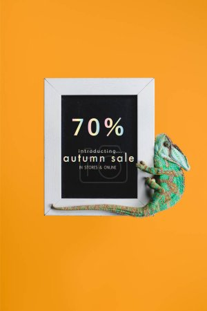 bright green chameleon on blackboard with autumn sale isolated on orange