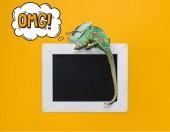 beautiful bright green chameleon with omg sign in thought bubble sitting on blackboard isolated on yellow