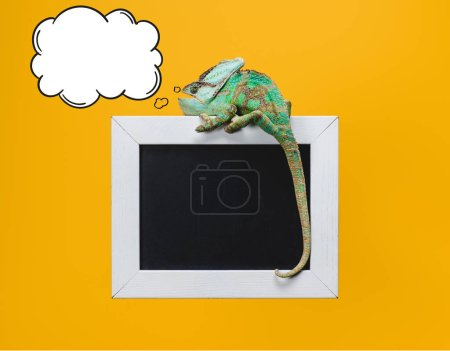 beautiful bright green chameleon with thought bubble on blackboard in white frame isolated on yellow