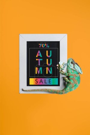 beautiful bright green chameleon on blackboard with autumn sale isolated on orange