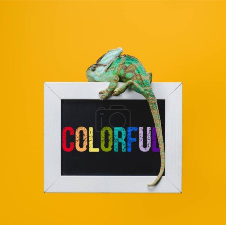 beautiful bright exotic chameleon on blackboard with colorful sign isolated on yellow