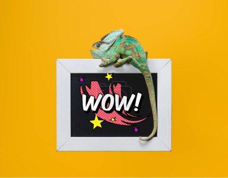 beautiful green chameleon on blackboard with wow symbol isolated on yellow