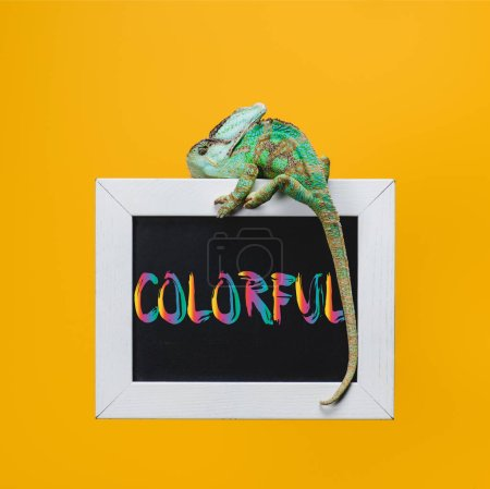 bright exotic chameleon on blackboard with colorful symbol isolated on yellow