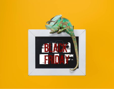 beautiful green chameleon on blackboard with black friday sign isolated on yellow