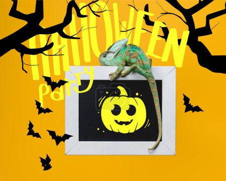 bright exotic chameleon on blackboard with halloween party, bats and pumpkin isolated on yellow