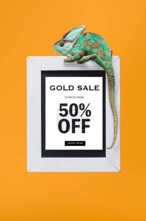beautiful colorful reptile on blackboard with 50 percents off, gold sale isolated on yellow