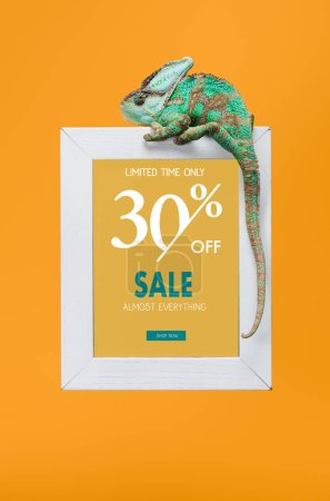beautiful colorful reptile on blackboard with 30 percents off - sale isolated on yellow