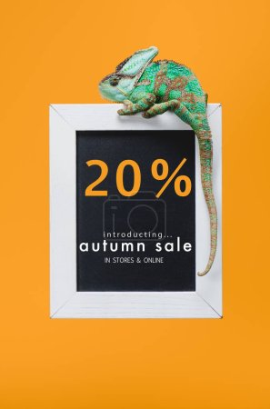 beautiful colorful reptile on blackboard with 20 percents - autumn sale isolated on yellow