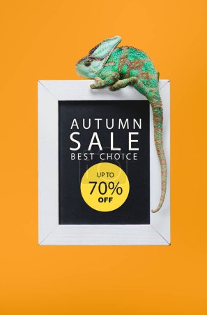 beautiful colorful reptile on blackboard with 70 percents - autumn sale isolated on yellow