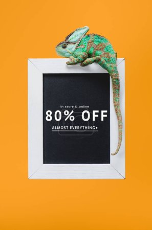 beautiful colorful reptile on blackboard with 80 percents off sale isolated on yellow