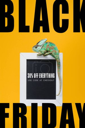 beautiful colorful reptile on blackboard with black friday sale isolated on yellow