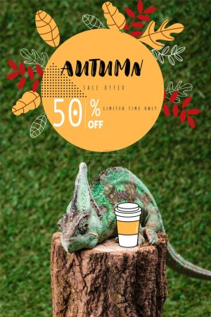 chameleon sitting on stump with coffee to go on green grass with autumn sale