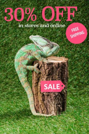 beautiful bright green chameleon climbing on stump with sale tag, with 30 percents off, free shipping lettering