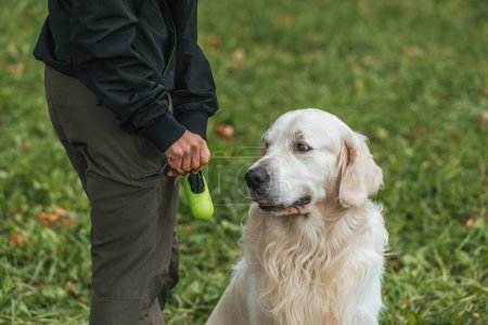 cropped shot of woman holding bag for cleaning after pet in park