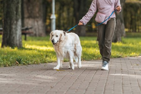 cropped shot of girl walking with guide dog in park