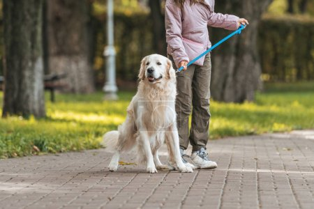 cropped shot of young woman walking with guide dog in park