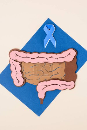 top view of prostate cancer awareness blue ribbon and human large intestine on blue with beige