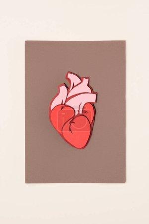 Photo pour Vue d'en haut de cœur de l'homme anatomique sur brun beige - image libre de droit