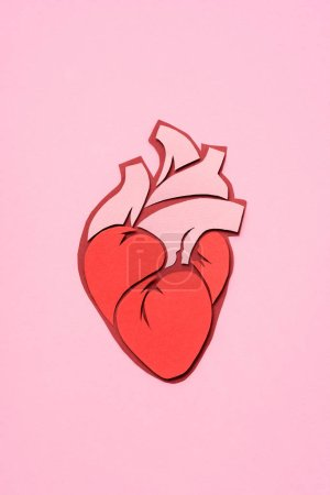 elevated view of anatomical human heart on pink