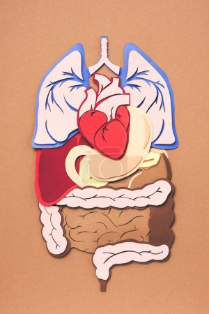 Photo for Elevated view of human internal organs on brown - Royalty Free Image