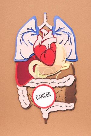 Photo pour Lay plat avec les organes internes et le cancer de lettrage sur brown - image libre de droit